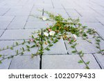 weed on a stone floor | Shutterstock . vector #1022079433