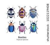 beetle speecies poster.... | Shutterstock .eps vector #1022119408