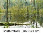 swamp in natural forest  muritz ... | Shutterstock . vector #1022121424