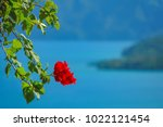 red tropical flower on the... | Shutterstock . vector #1022121454
