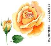 wildflower yellow tea hybrid... | Shutterstock . vector #1022133598