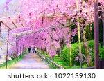 kyoto  japan   13 april 2017 ... | Shutterstock . vector #1022139130