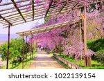 kyoto  japan   13 april 2017 ... | Shutterstock . vector #1022139154
