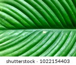 close up green leaf for... | Shutterstock . vector #1022154403
