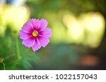 flower  wallpaper  garden ...   Shutterstock . vector #1022157043