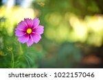 flower  wallpaper  garden ...   Shutterstock . vector #1022157046