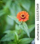 flower  wallpaper  garden ...   Shutterstock . vector #1022157049