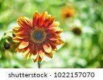 flower  wallpaper  garden ...   Shutterstock . vector #1022157070