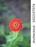 flower  wallpaper  garden ...   Shutterstock . vector #1022157076