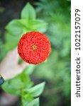 flower  wallpaper  garden ...   Shutterstock . vector #1022157079
