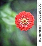 flower  wallpaper  garden ...   Shutterstock . vector #1022157100