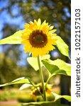 flower  wallpaper  garden ...   Shutterstock . vector #1022157103