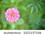 flower  wallpaper  garden ...   Shutterstock . vector #1022157106