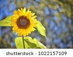 flower  wallpaper  garden ...   Shutterstock . vector #1022157109