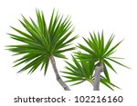 Yucca Isolated