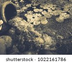 waterfall from an old vase | Shutterstock . vector #1022161786