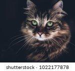 big green eyes | Shutterstock . vector #1022177878
