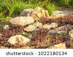 a plot of summer landscaped... | Shutterstock . vector #1022180134