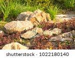 a plot of summer landscaped... | Shutterstock . vector #1022180140