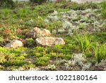 a plot of summer landscaped... | Shutterstock . vector #1022180164