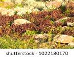 a plot of summer landscaped... | Shutterstock . vector #1022180170