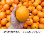 hand hold valencia orange with... | Shutterstock . vector #1022189470