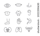 human anatomy icons with white... | Shutterstock .eps vector #1022200630