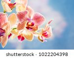 red orchid flower on the blue... | Shutterstock . vector #1022204398
