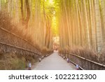 bamboo grove with walking way... | Shutterstock . vector #1022212300