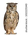 Stock photo eurasian eagle owl bubo bubo a species of eagle owl standing in front of white background 102225340