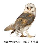 barn owl  tyto alba  standing... | Shutterstock . vector #102225400