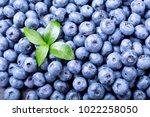 close up of fresh blueberries ... | Shutterstock . vector #1022258050