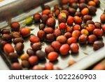 raw coffee beans  | Shutterstock . vector #1022260903
