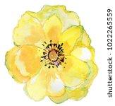 big yellow flower. watercolor... | Shutterstock . vector #1022265559