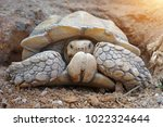 african spurred tortoise at... | Shutterstock . vector #1022324644