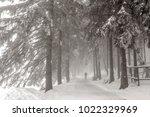 Verschneiter Winterwald Mit Fug ...