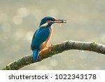 detailed closeup of a... | Shutterstock . vector #1022343178