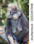 monkey portrait photography | Shutterstock . vector #1022347048