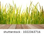Paddy Rice Field Close Up With  ...
