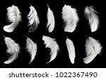 set of white feathers isolated... | Shutterstock . vector #1022367490
