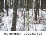 bullfinches in the winter forest | Shutterstock . vector #1022367928