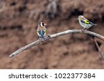 little exotic bird with...   Shutterstock . vector #1022377384