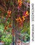 madeira island tropical... | Shutterstock . vector #1022412640