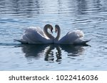 Swans Creating Heart Shape At...