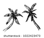 palm trees. hand drawn sketch.... | Shutterstock .eps vector #1022423473