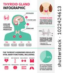 thyroid gland infographic... | Shutterstock .eps vector #1022424613