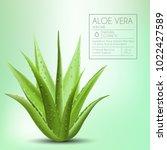 Aloe Vera With Fresh Drops Of...