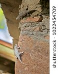 two diverse lizards of the same ... | Shutterstock . vector #1022454709