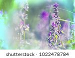 amazing colorful flower | Shutterstock . vector #1022478784