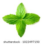 fresh peppermint leaves... | Shutterstock . vector #1022497150